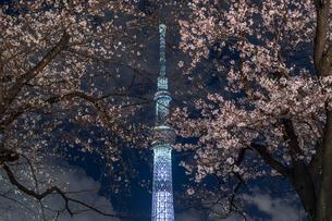 隅田川の夜桜とライトアップされたスカイツリーの写真素材 [FYI03823943]