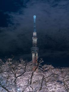 隅田川の夜桜とライトアップされたスカイツリーの写真素材 [FYI03823945]
