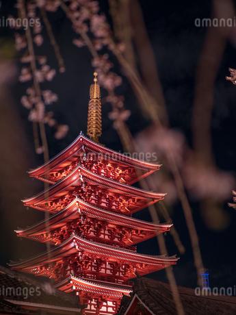 ライトアップされた浅草浅草寺の五重塔と夜桜の写真素材 [FYI03823948]