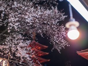 ライトアップされた浅草浅草寺の五重塔と夜桜の写真素材 [FYI03823950]