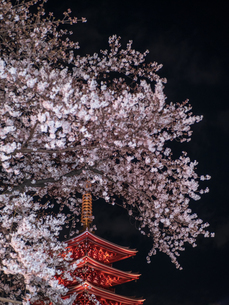 ライトアップされた浅草浅草寺の五重塔と夜桜の写真素材 [FYI03823952]