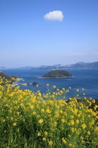 菜の花と海の写真素材 [FYI03824352]
