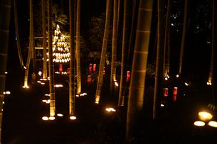 竹林ライトアップ(小机城址市民の森)の写真素材 [FYI03824469]