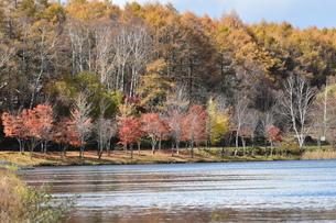 湖畔の紅葉の写真素材 [FYI03824551]