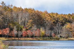 湖畔の紅葉2の写真素材 [FYI03824552]