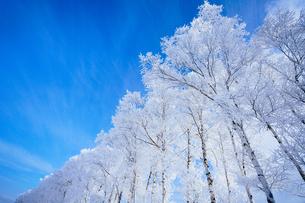 霧氷と青空の写真素材 [FYI03824574]