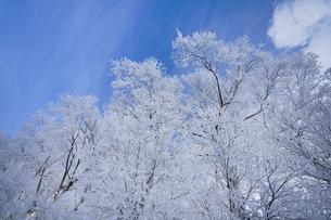 霧氷と青空の写真素材 [FYI03824575]