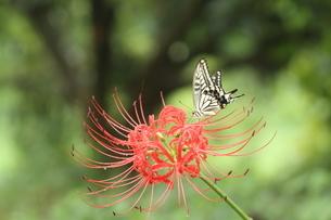 花と蝶の写真素材 [FYI03824763]