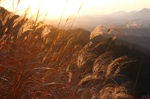 里山の写真素材 [FYI03824766]
