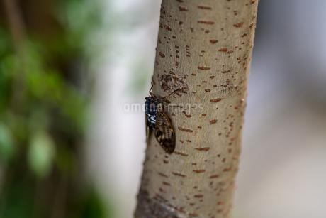 セミが鳴く夏の風景の写真素材 [FYI03824805]