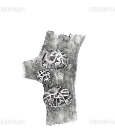 水彩 椎茸 シイタケ 原木栽培 水墨画風 モノトーンのイラスト素材 [FYI03825108]