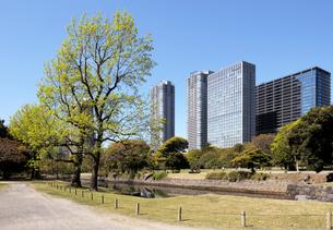 浜離宮恩賜庭園の新緑の芽吹きと高層ビル群の写真素材 [FYI03825216]