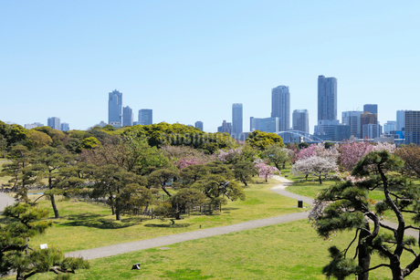 春の浜離宮恩賜庭園と都心の高層ビル群の写真素材 [FYI03825221]