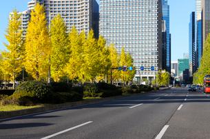 日比谷通りとイチョウ並木の紅葉の写真素材 [FYI03825239]