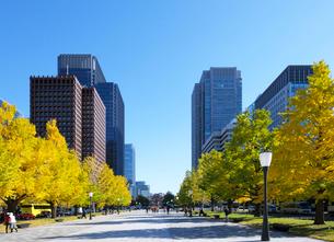 行幸通りとイチョウ並木の紅葉と丸の内の高層ビル群の写真素材 [FYI03825258]