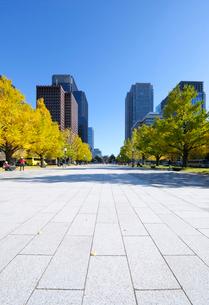 行幸通りの石畳とイチョウ並木の紅葉と丸の内の高層ビル群の写真素材 [FYI03825260]