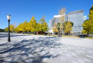 行幸通りの石畳の歩道とイチョウ並木の紅葉の写真素材 [FYI03825261]