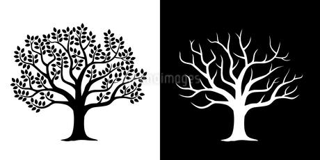 葉の茂った木と散った木 イラストセットのイラスト素材 [FYI03825272]