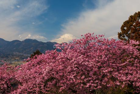 松田山からの富士山の写真素材 [FYI03825368]
