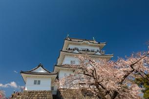 小田原城と桜の写真素材 [FYI03825377]