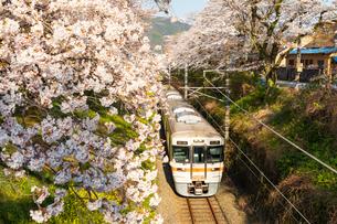 山北駅付近の桜の写真素材 [FYI03825379]