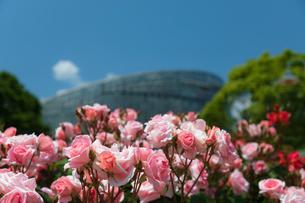 バラと温室の写真素材 [FYI03825391]