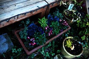 バラ園の植物の写真素材 [FYI03825502]