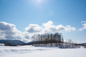 冬の晴れた空と雑木林の写真素材 [FYI03825538]