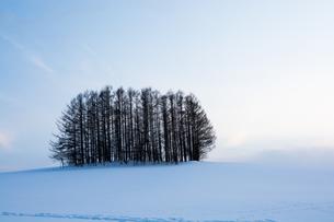 雪の丘のカラマツ林の写真素材 [FYI03825543]