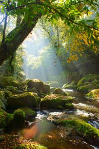 秋の菊池渓谷の写真素材 [FYI03825842]