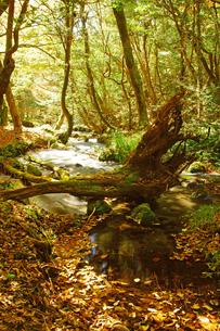 秋の山吹水源の写真素材 [FYI03825848]