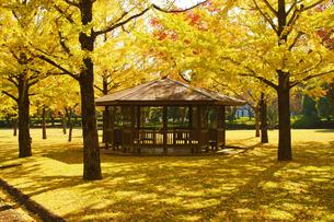 秋の熊本テクノリサーチパークの写真素材 [FYI03825856]