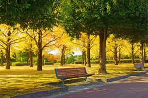 秋の熊本テクノリサーチパークの写真素材 [FYI03825858]