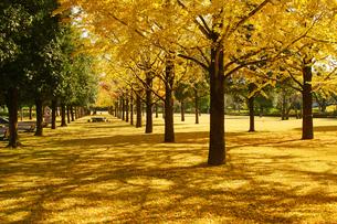 秋の熊本テクノリサーチパークの写真素材 [FYI03825860]