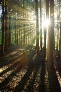 森の光芒の写真素材 [FYI03825931]