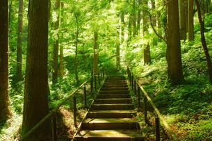森林浴の写真素材 [FYI03825968]