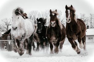 冬の馬の写真素材 [FYI03826133]