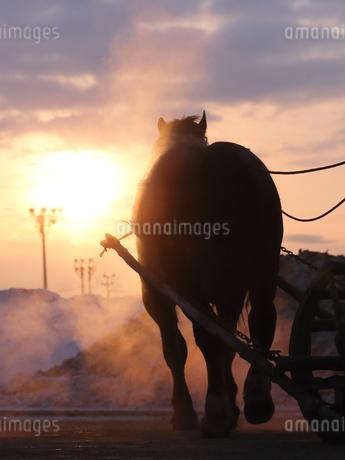 冬の馬の写真素材 [FYI03826134]