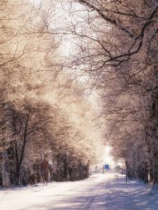 霧氷の写真素材 [FYI03826153]