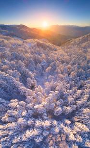 霧氷の樹林と朝日と富士山と八ヶ岳連峰の写真素材 [FYI03826187]