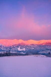 白馬連峰の朝のモルゲンロートと野平の雪原の写真素材 [FYI03826235]