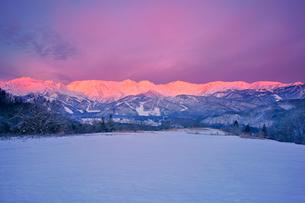 白馬連峰の朝のモルゲンロートと野平の雪原の写真素材 [FYI03826236]