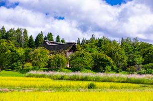 稲穂が黄色く色づいた遠野ふるさと村の写真素材 [FYI03826514]