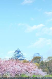 青空と桜と大阪城の写真素材 [FYI03826624]