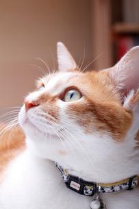 飼い主を見上げる猫の写真素材 [FYI03826877]