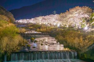 宮城野早川堤の桜の写真素材 [FYI03827045]