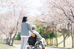 桜並木を車椅子で散歩をするシニア男性の後ろ姿の写真素材 [FYI03827170]