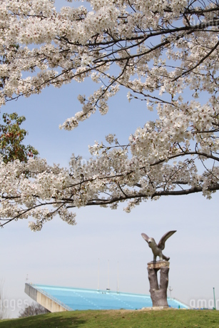 満開の桜の写真素材 [FYI03827200]