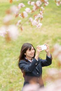 桜の前でスマホで写真を撮る女子学生の写真素材 [FYI03827499]