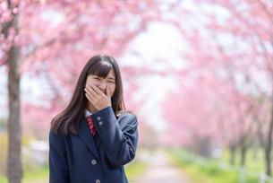 桜並木の前で口を押さえる女子学生の写真素材 [FYI03827508]